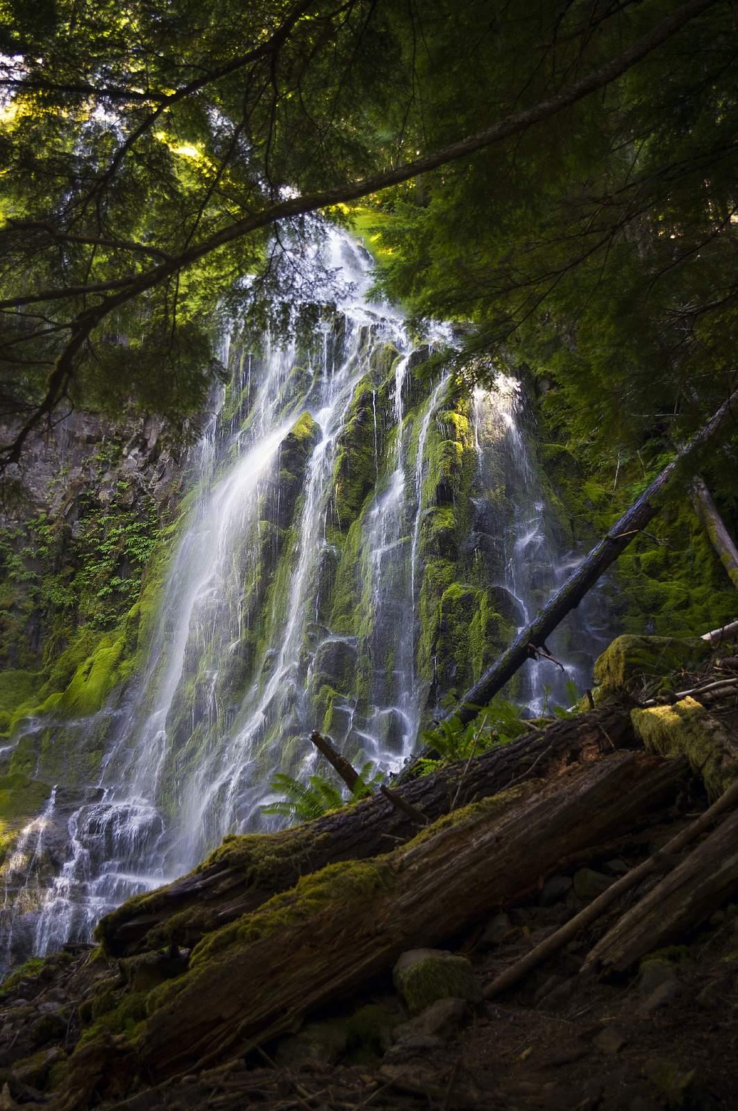 proxy falls2 Proxy Falls   Oregon Cascades