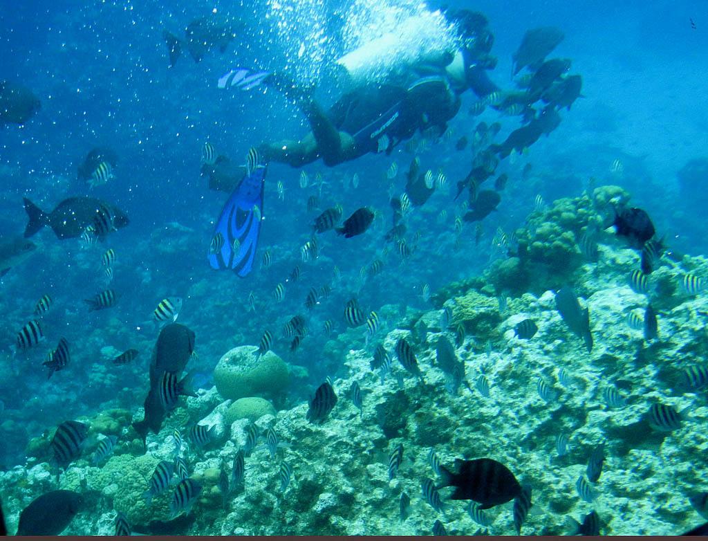 cayman islands4 Reasons to Visit Cayman Islands