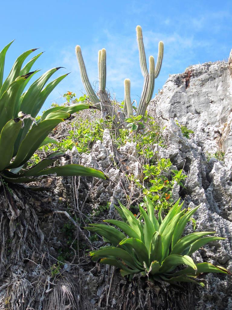 cayman islands6 Reasons to Visit Cayman Islands