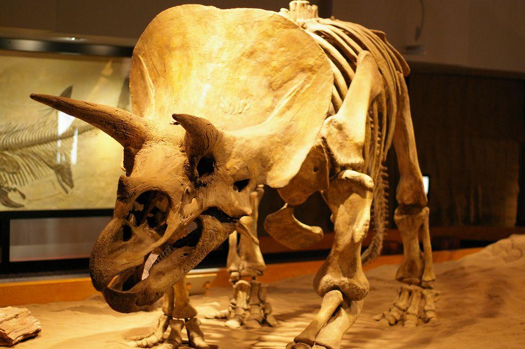 royal tyrrell museum Royal Tyrrell Museum of Palaeontology in Drumheller, Canada