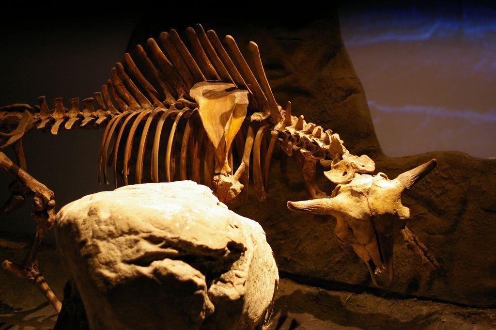 royal tyrrell museum1 Royal Tyrrell Museum of Palaeontology in Drumheller, Canada