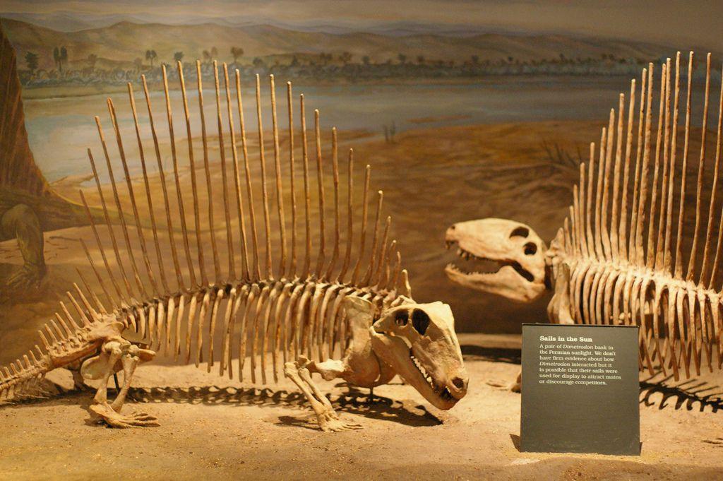 royal tyrrell museum10 Royal Tyrrell Museum of Palaeontology in Drumheller, Canada