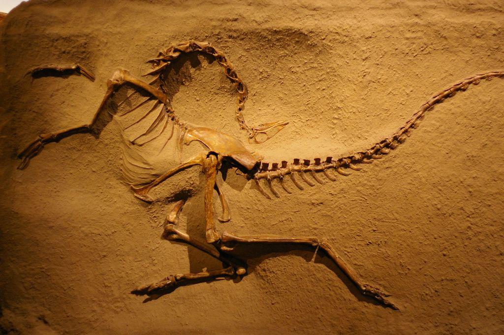 royal tyrrell museum12 Royal Tyrrell Museum of Palaeontology in Drumheller, Canada