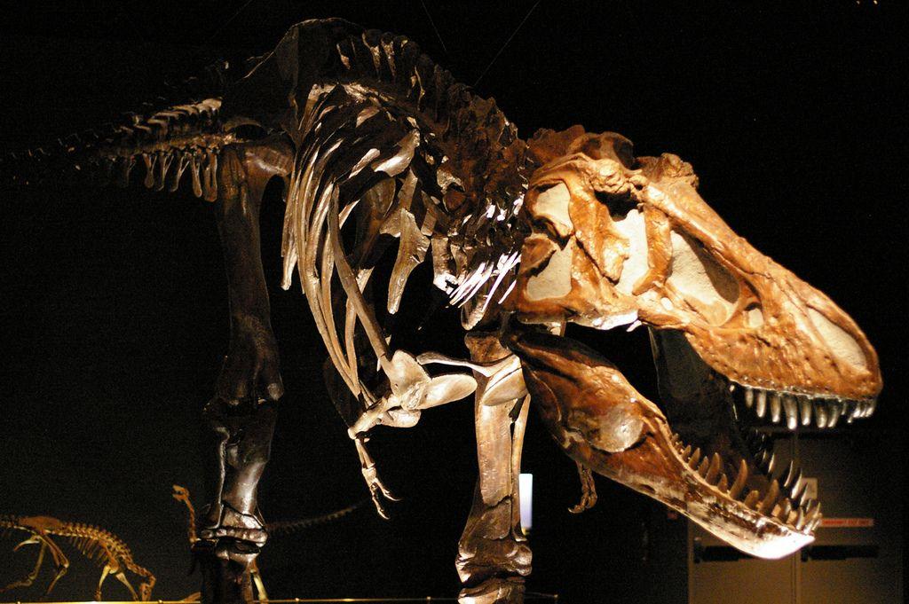royal tyrrell museum3 Royal Tyrrell Museum of Palaeontology in Drumheller, Canada
