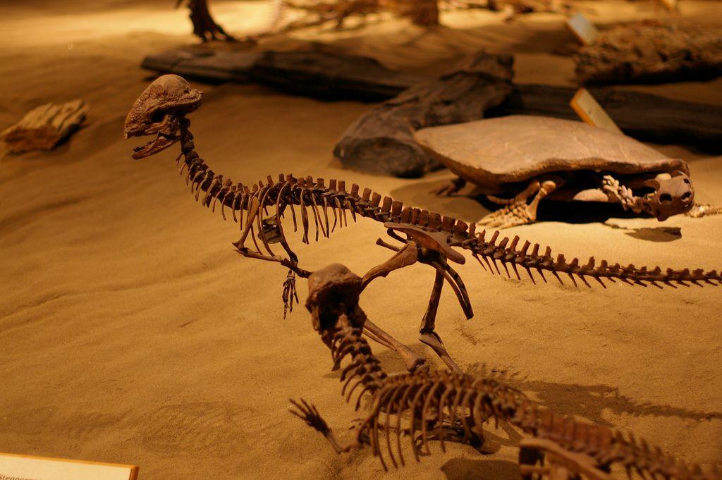 royal tyrrell museum9 Royal Tyrrell Museum of Palaeontology in Drumheller, Canada