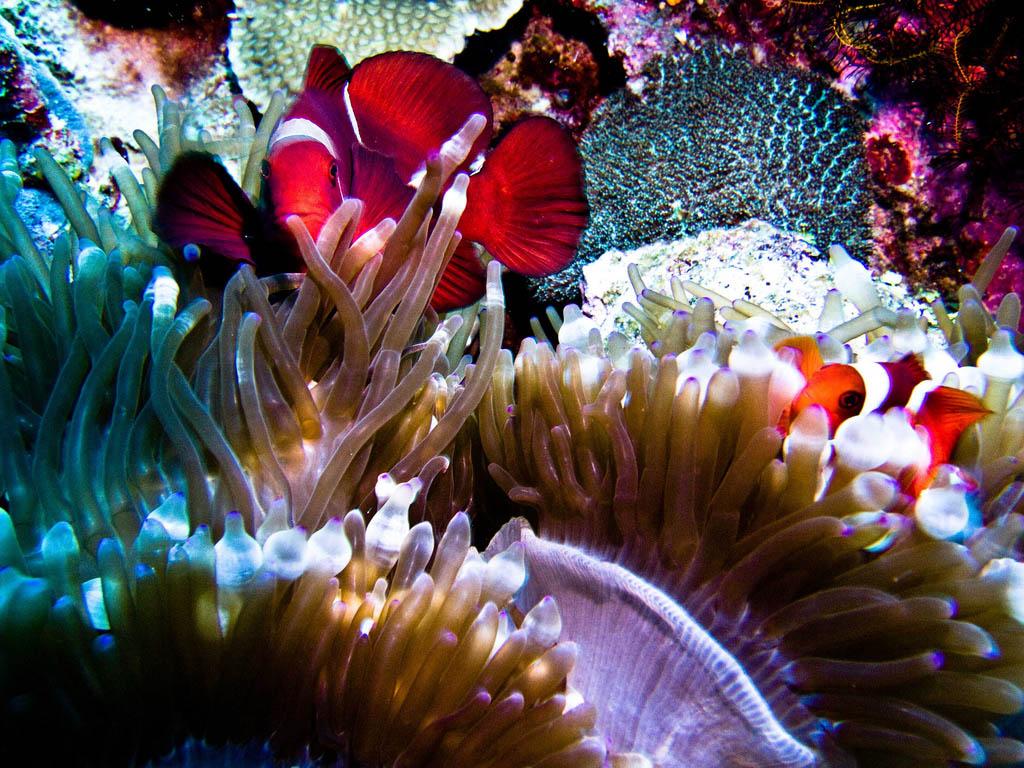 scuba diving1 Scuba Diving in Beatiful Waters of Indonesia