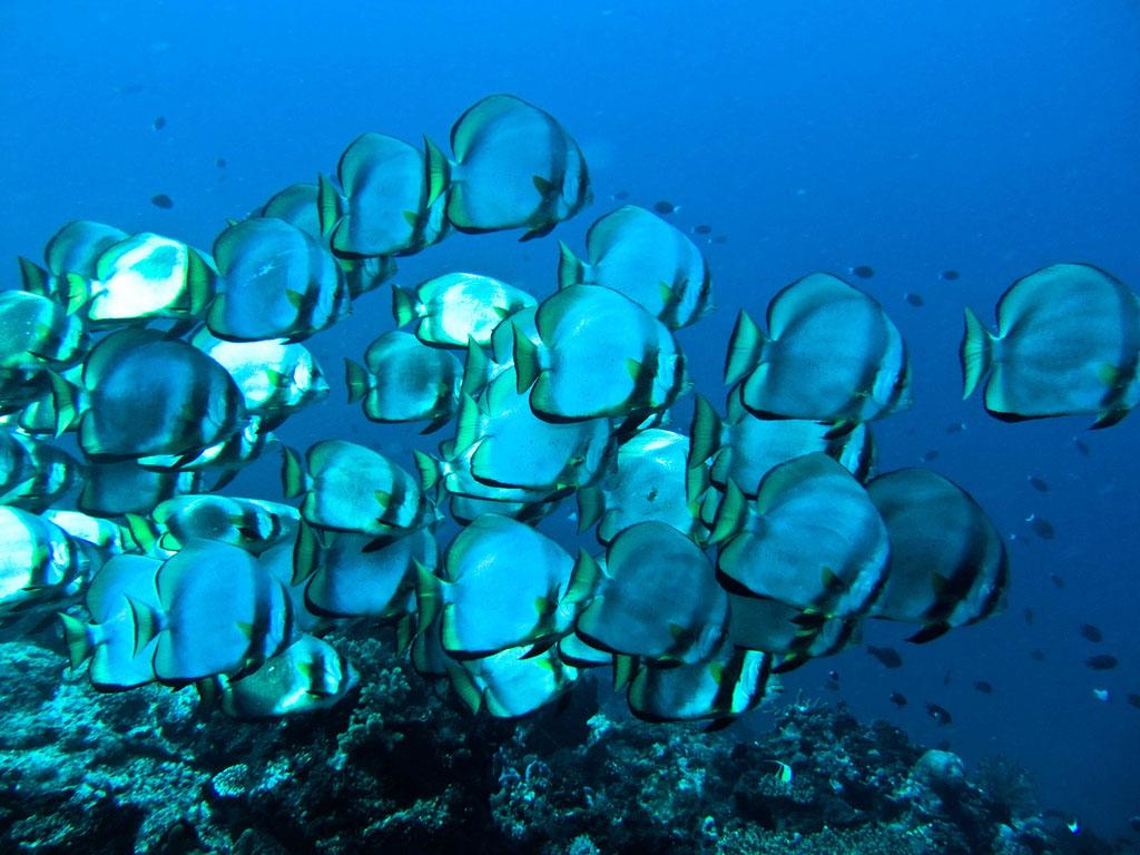 scuba diving11 Scuba Diving in Beatiful Waters of Indonesia