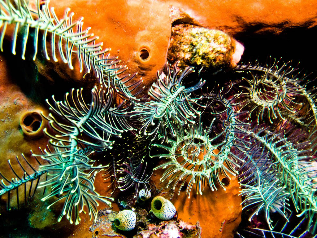 scuba diving13 Scuba Diving in Beatiful Waters of Indonesia
