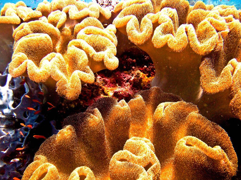 scuba diving14 Scuba Diving in Beatiful Waters of Indonesia