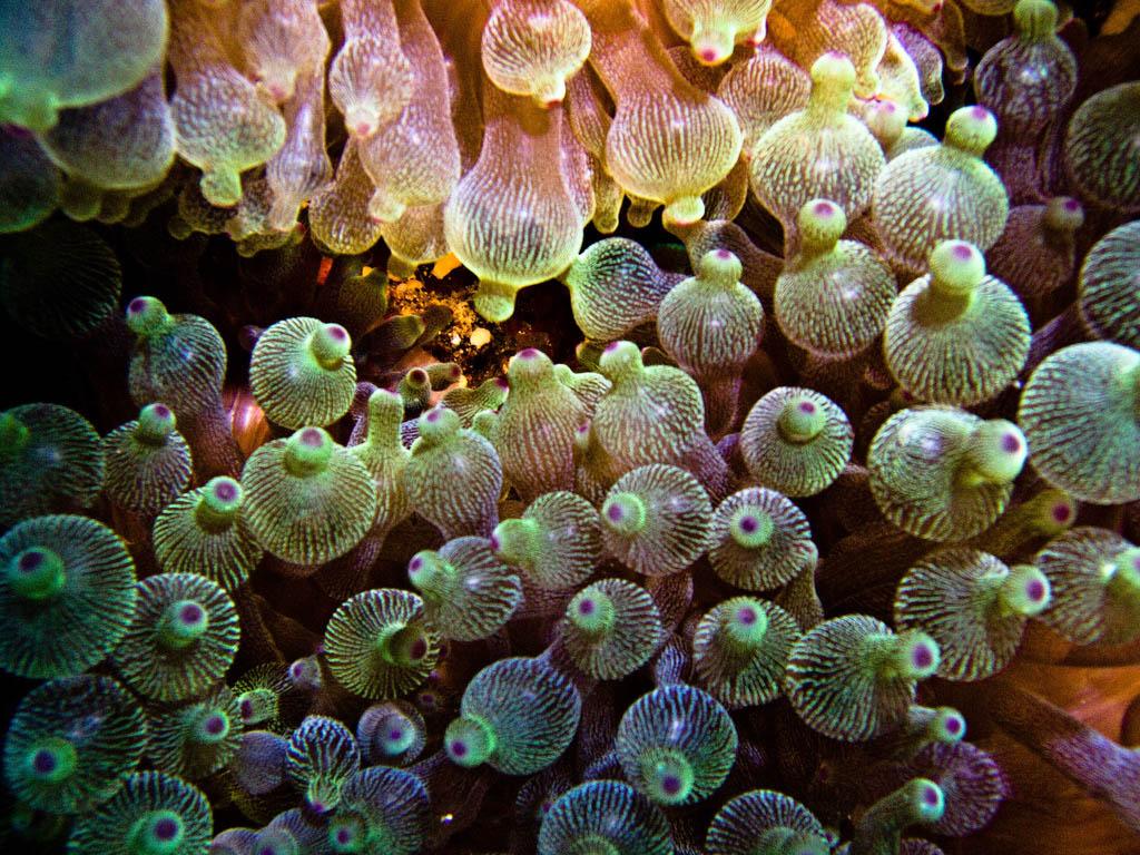 scuba diving15 Scuba Diving in Beatiful Waters of Indonesia