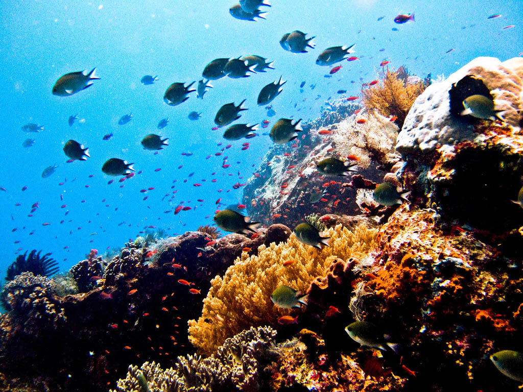 scuba diving3 Scuba Diving in Beatiful Waters of Indonesia