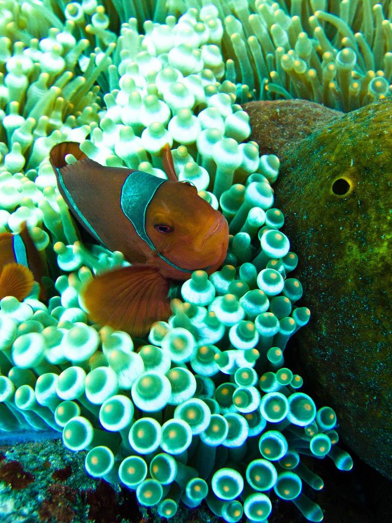 scuba diving4 Scuba Diving in Beatiful Waters of Indonesia