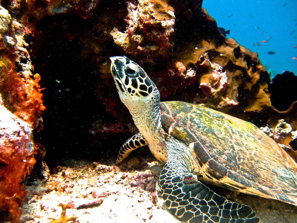 scuba diving6 Scuba Diving in Beatiful Waters of Indonesia