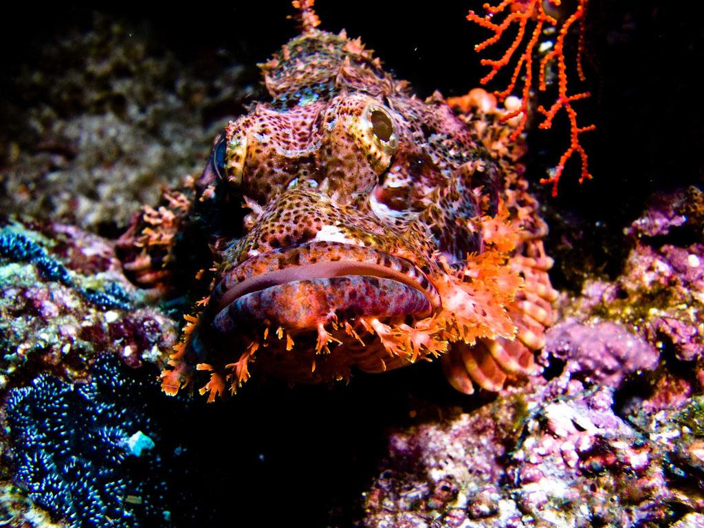 scuba diving7 Scuba Diving in Beatiful Waters of Indonesia