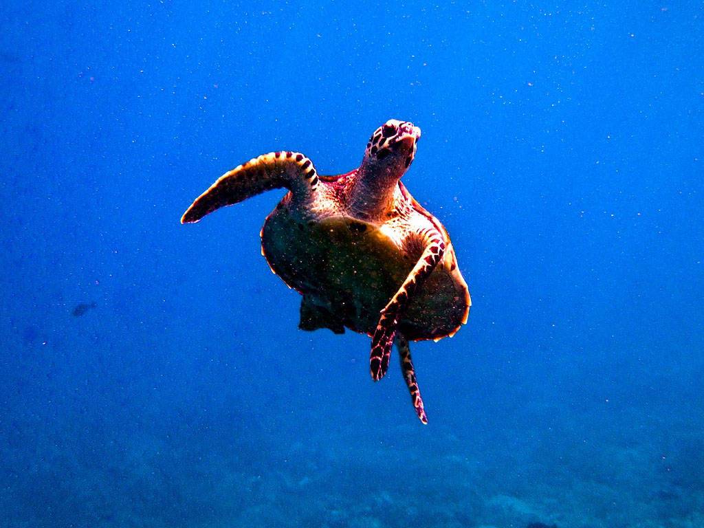 scuba diving8 Scuba Diving in Beatiful Waters of Indonesia