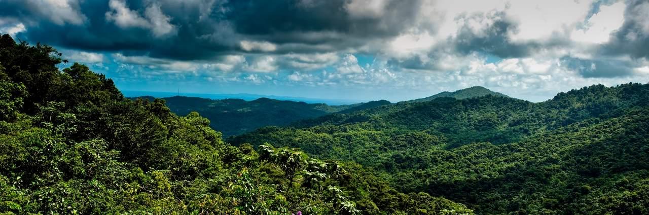 puerto rico el yunque El Yunque Rain Forest in Puerto Rico