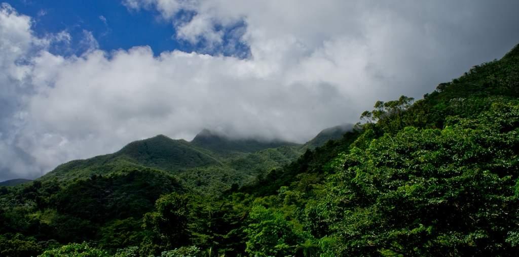 puerto rico el yunque1 El Yunque Rain Forest in Puerto Rico
