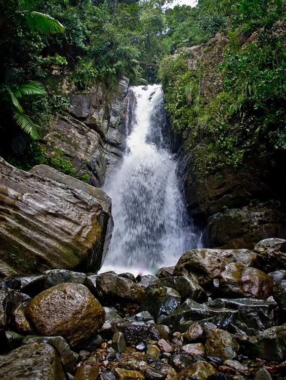 puerto rico el yunque2 El Yunque Rain Forest in Puerto Rico