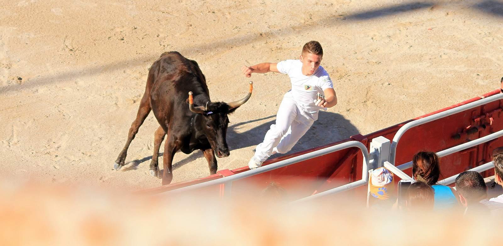 arles1 Bull Fighting in Arles Arena