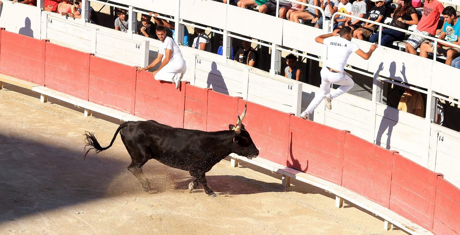 arles5 Bull Fighting in Arles Arena