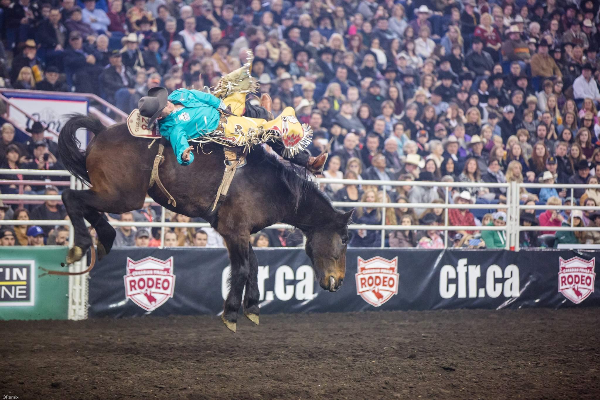 finals rodeo6 Canadian Finals Rodeo in Edmonton