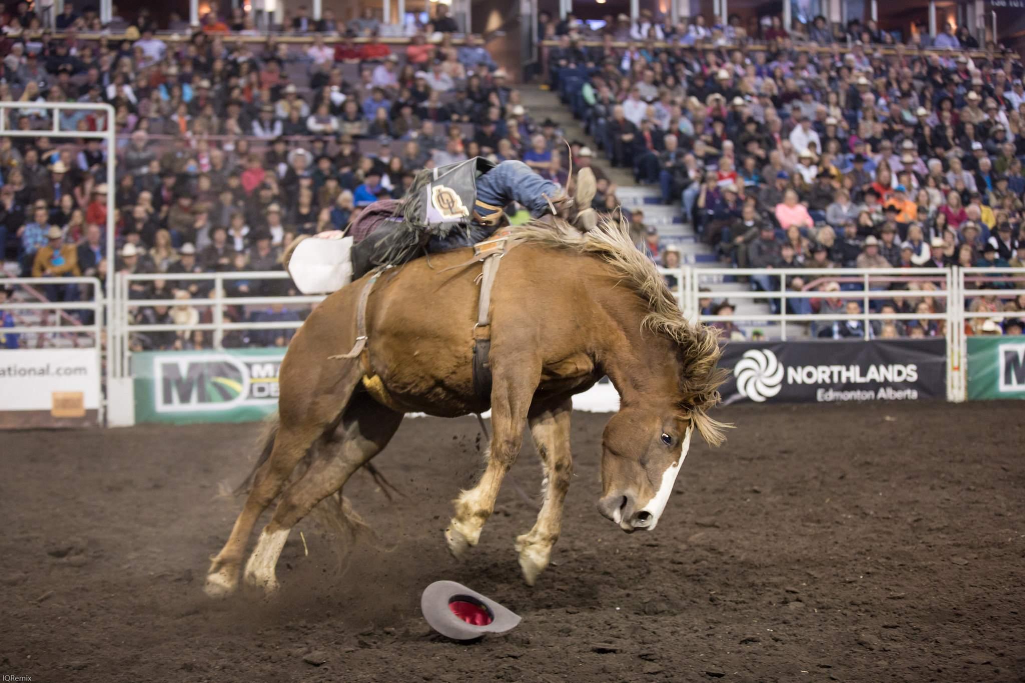 finals rodeo8 Canadian Finals Rodeo in Edmonton