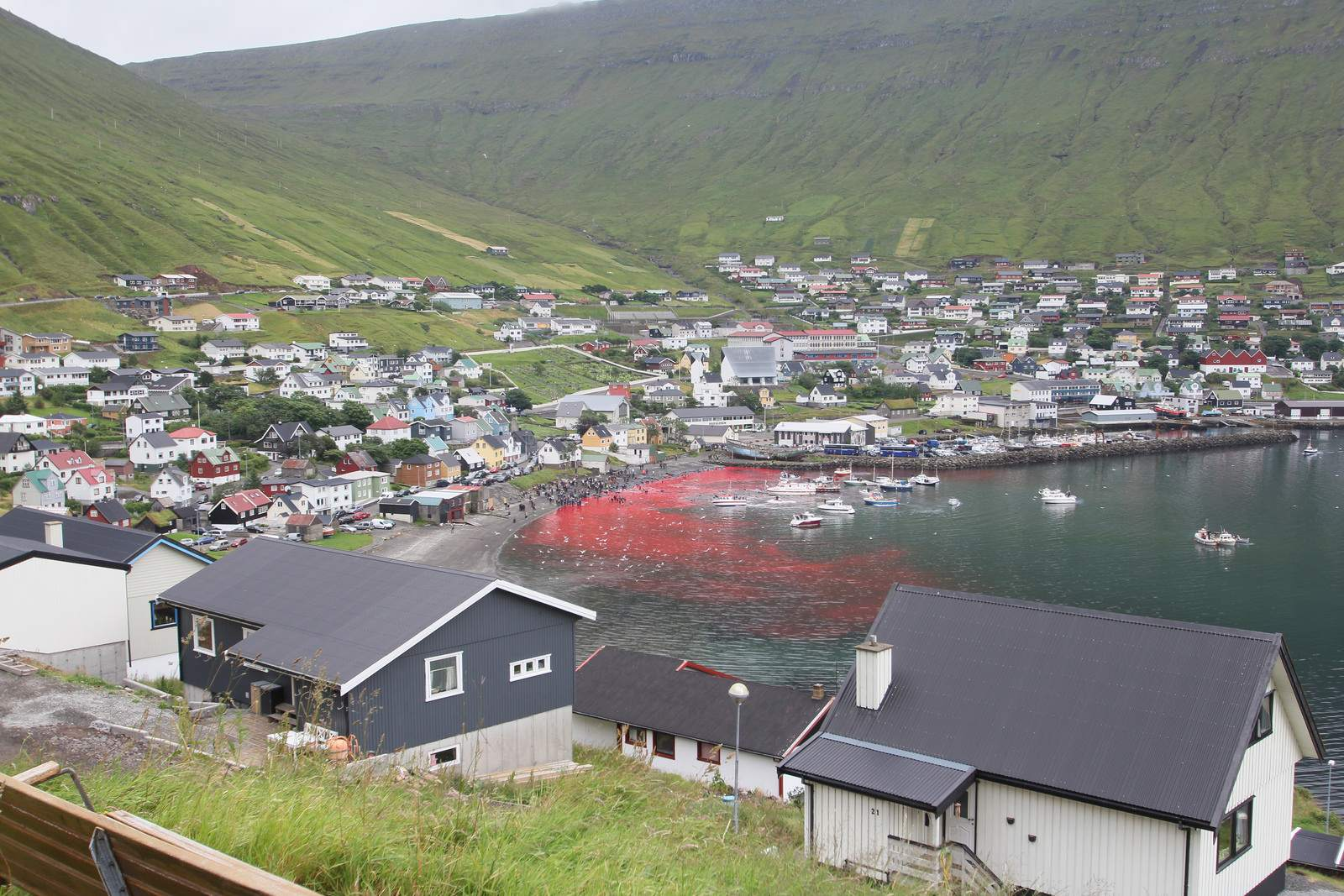 whaling6 Whale Drive at Faroe Islands