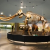 La Brea Tar Pits and Museum in LA