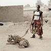 The Nigerian Hyena Men – Do You Want a Good GuardDog ?