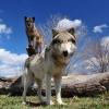 Wildlife Education – Wolf Park