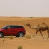 Welcome to Desert with Range Rover Evoque