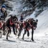 The World Championship of Sled Dog in Black Forest, Germany