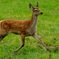 British Wildlife Centre – ...