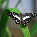Butterfly World – How to S...