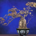 What is a Bonsai Tree ?