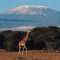 Mount Kilimanjaro – The Ro...
