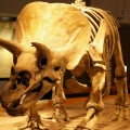 Royal Tyrrell Museum of Palaeont...