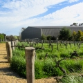 Wine Path at Barossa Valley, Aus...