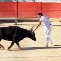 Bull Fighting in Arles Arena