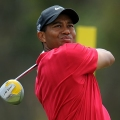 Tiger on Golf Green