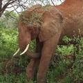 Interesting Endangered Animals F...