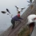 Strange Animal Attacks on Humans