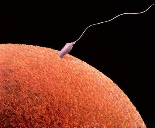 sperm motility Get Pregnant of Partners Lazy Sperm