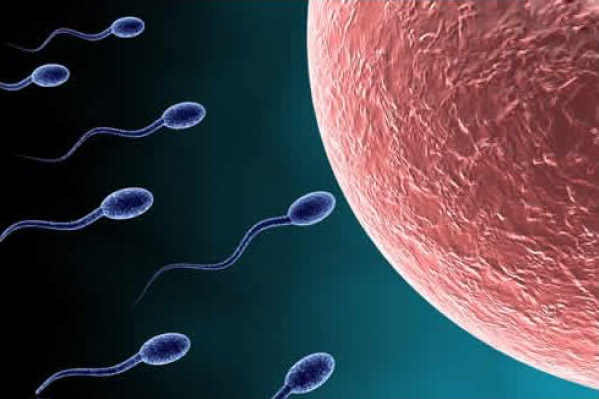 sperm motility3 Get Pregnant of Partners Lazy Sperm
