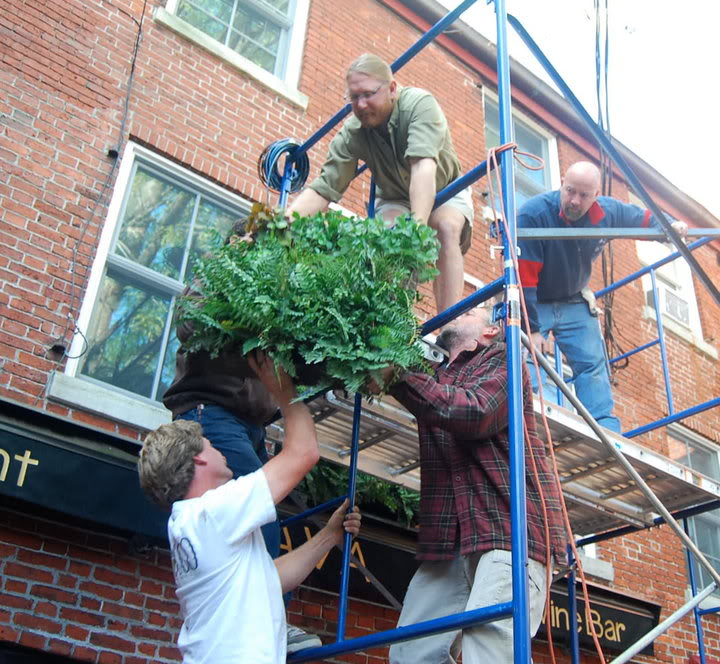 vertical gardens12 How to build a Vertical Garden aka Living Wall